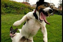 Veselé videá / Zasmejme sa na našich psíkoch