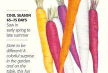 Botanical Interests - Carrots