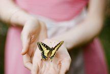 Butterflies |