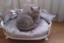 kanapy dla kotów