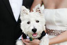 Dogs in Weddings