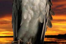 Birds - Hawk -  Eagle -  Raven...