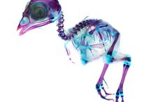 Watercolor Animal Skeleton Projects