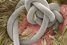 Microscopic images / Images of everyday things under a microscope