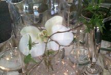 Willow& Company / Joanna Jadrijevich.   Orchids