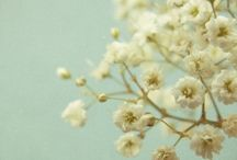 Flowers ◈ Flowerpower