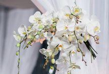 Wedding Chuppah / by Julie Cohn