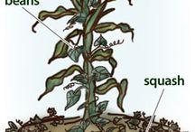 Záhrada, chov, permakultúra