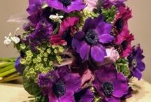 Anenome bouquets