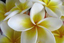 flowers / by Brendaria Gastelum