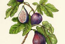 Botanical Illustration / by Pine Cones and Acorns Blog