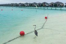 Maldivas / Maldivas