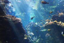 A vízalatti élet