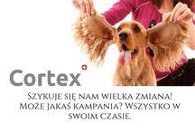 Dbaj o mnie! / Prosty poradnik, apel jak dbać o swojego czworonoga. Porady jak używać wysokiej jakości produktów propolisowych dla zwierzaków w codzienniej pielęgnacji!