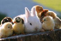 Cuteness / Ziua noastră devine mai bună când vedem că există astfel de drăgăleșenii! :X
