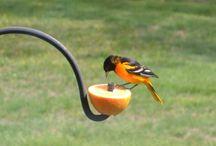 Bird/squirrel feeder