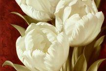 Flores etc