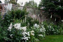 White/moon garden