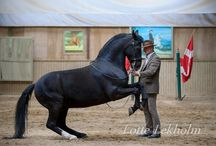 Clissical dressage