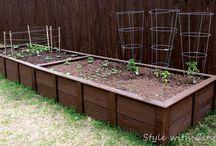 gardening 101 / by Ashley Bandaruk