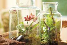 Garden - Terrariums