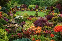 Gardening  / by Larissa Bennett