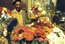 flower markets cape town