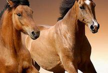 Horses ❤ Hester
