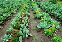огород,сад