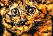 Katter / Søte, vakre, nydelige katter.