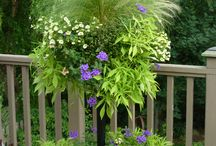 Flowers, Garden, Landscaping / Great Ideas For My Yard! / by Debbie Wilson