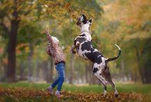 Собаки и животные
