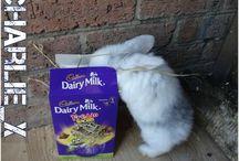 diy králičci