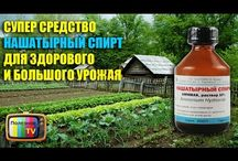лечим растения