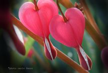 piante magnifiche