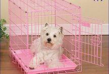 Dog Training / Learn ways to train you puppy or dog.