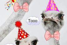 Verjaardags e.a. Felicitatiekaarten