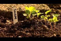@ veg garden