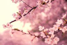 blossom / by The Tiny Card Company