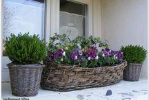 jardiniere  et potées d hiver