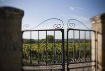 Nos vignes / Château Lafon-Rochet