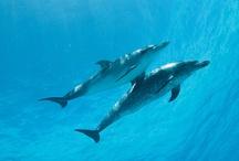 Dolphins Everywhere