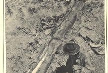 diplodocus and paleontology