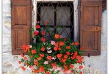 Window Boxes / by Katherine Vogel