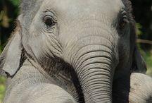 Elephants!!!!!