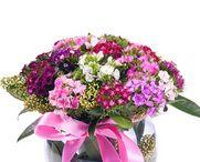 Edirne çiçek siparişi / Edirne 'ye çiçek siparişi vermek artık çok kolay, Edirne çiçekçi leri arasında en kalite olanlarını bünyesinde barındıran Çiçek Vitrini.com ile Edirne çiçek siparişi 2 saat'te teslim. Çiçek Vitrini ile Edirne çiçek siparişi verirken mis kokulu lilyumlar, rengarenk güller, orkideler ve kır çiçekleri gönderme imkanınız var. http://www.cicekvitrini.com/cicekler/edirne-cicek-siparisi