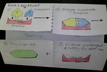 enzymes activity