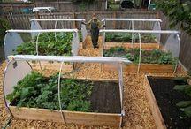 Eigen tuin - Kas/Year round