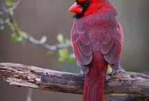 Vogels / Vogels voor handvaardigheid