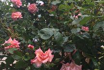 jardin / Mon jardin